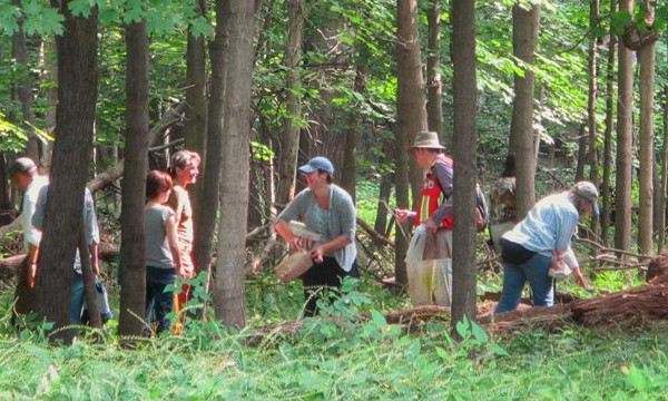 People in woods collecting mushrooms.
