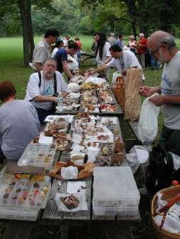 Mycologists and members examine mushrooms at picnic tables.